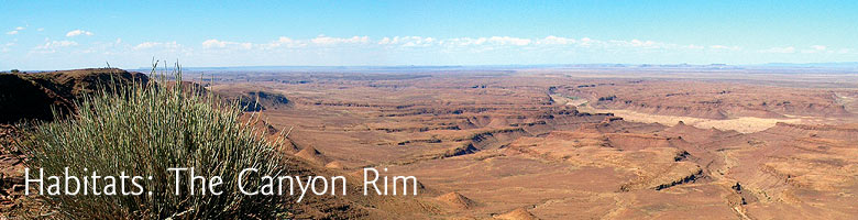 Habitats: The Canyon Rim